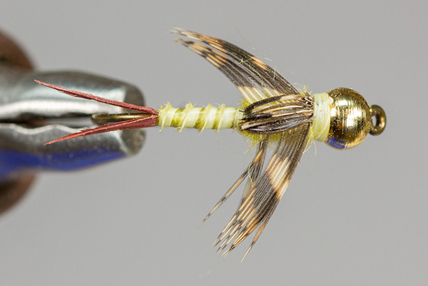 Flyillusions Com Bead Head Biot Body Golden Stone Nymph